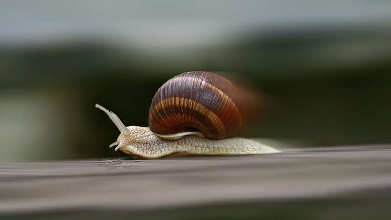 Fast Moving Snail