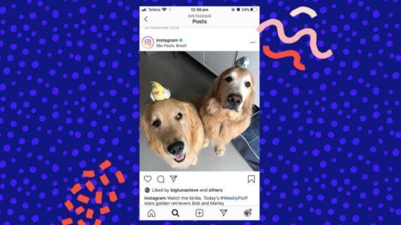 Instagram testing